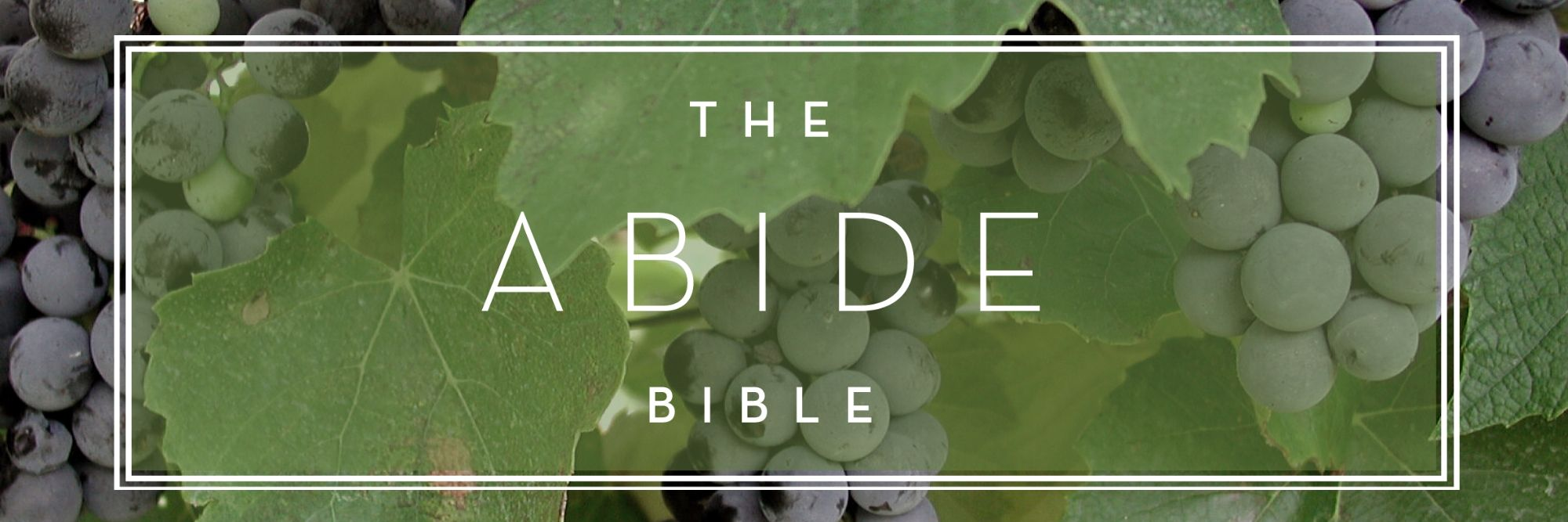 Abide-Bible